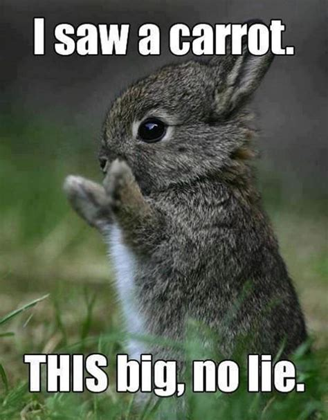 Hilarious Easter Memes - easter 2015 all the memes you need to see heavy com page 12