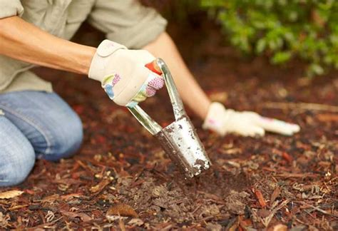 how to plant flowering bulbs at the home depot