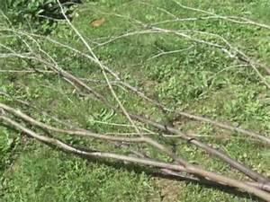 Branche De Bouleau : home staging d coration d 39 int rieur avec branche youtube ~ Melissatoandfro.com Idées de Décoration