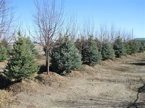 heidrich s colorado tree farm nursery llc 80923 colorado
