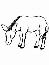 Donkey Coloring Pages Printable Bestcoloringpagesforkids sketch template
