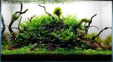 Aquarium Aquascape by The Nature Aquarium Style Aquascape