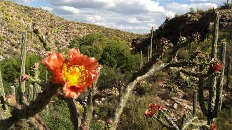 It's Still Fall in Arizona's Sabino Canyon and That's Bad