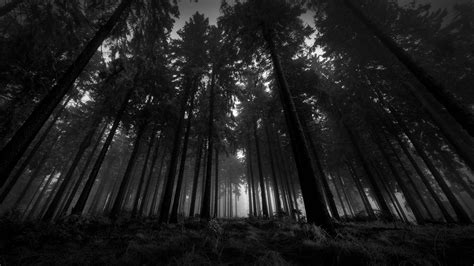 Dark Forest S Wallpapers 1080p