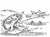 Trout Coloring 768px 37kb 1024 Drawings sketch template