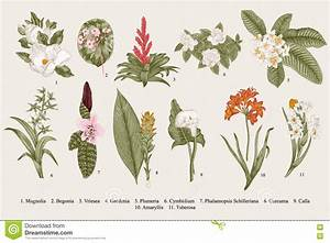 Exotic Flowers Set. Botanical Vector Vintage Illustration ...
