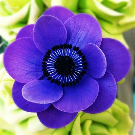 awesome anemone wedding flowers segerioscom