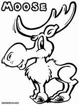 Moose Coloring Pages Cartoon Drawing Antlers Animal Getdrawings sketch template