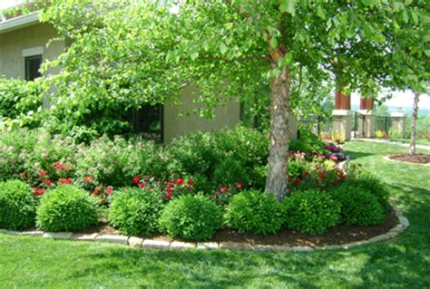 types  trees  landscaping front backyard