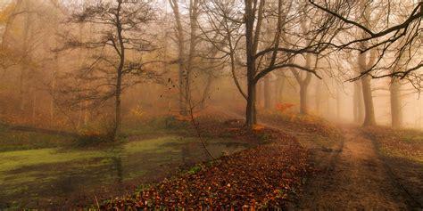 winding path   woods  autumn wall mural