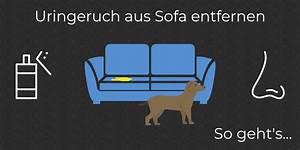 Hundehaare Vom Sofa Entfernen : uringeruch aus sofa entfernen so wird deine couch geruchsfrei ~ Bigdaddyawards.com Haus und Dekorationen
