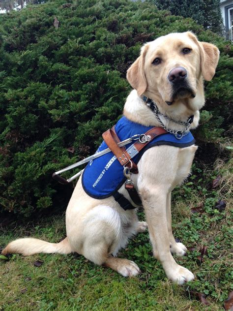 Adult Dog Boarding - BC and Alberta Guide Dogs