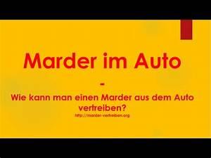 Wie Fange Ich Einen Marder : marder im auto wie kann ich einen marder aus dem auto vertreiben youtube ~ Frokenaadalensverden.com Haus und Dekorationen