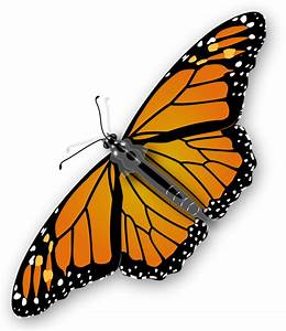 Monarch Butterfly by jimmiet - A colorful monarch butterfly