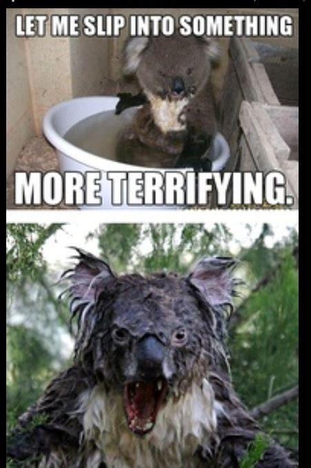 Wet Koala Picture Scary