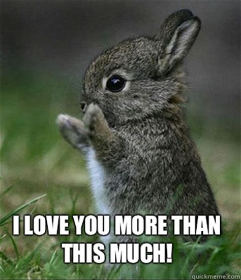 I Love You This Much Meme - cute bunny memes quickmeme