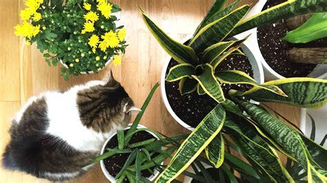 top 11 plantes int 233 rieur purificatrices d air planchers lauzon
