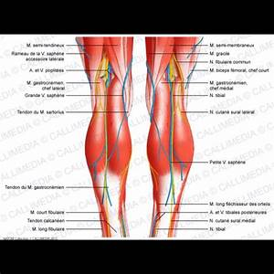 Image Result For Diagram Of Back Of Body