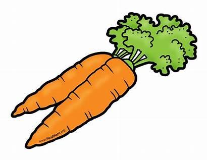 Clipart Vegetable Carrot Carrots Illustration Clip Vegetables