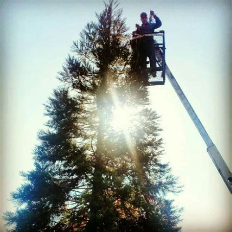 hanging christmas lights on a 34 tall tree need pole lights repaired or light bulbs replaced