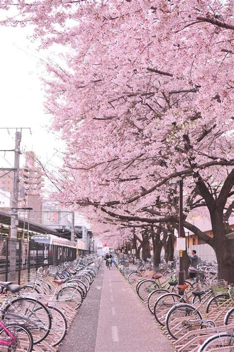 japan aesthetic wallpaper