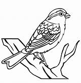 Sparrow Clip Birds Bird Coloring Kindergarten Drawing Clipart Line Pages Worksheet Insects Cliparts Chipping Fruit Iii Animals Cartoon Clipartpanda Animal sketch template