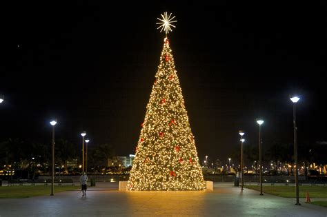buying a christmas tree in miami florida