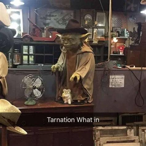 What In Tarnation Memes - 25 best ideas about laughing so hard on pinterest lol funny texts jokes and funny memes