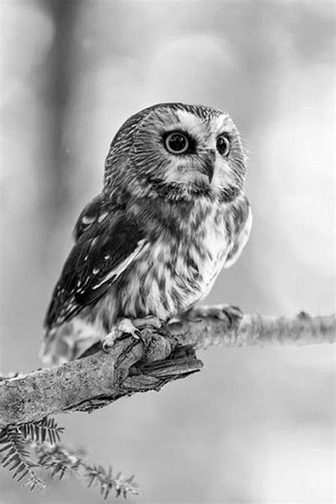 """inventans: """" — """"   Owl pictures, Owl photos, Baby owls"""