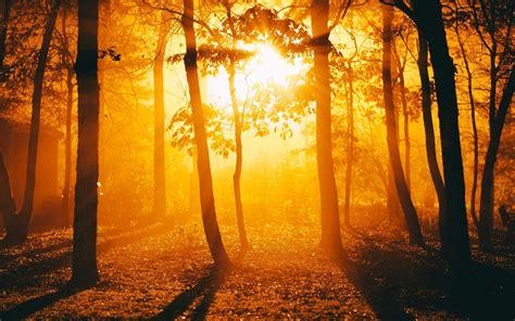 sunlight trees golden hour silhouette forest