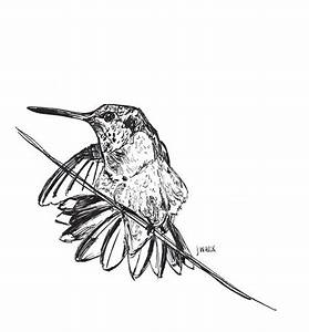 Black And White Birds Drawings   www.imgkid.com - The ...
