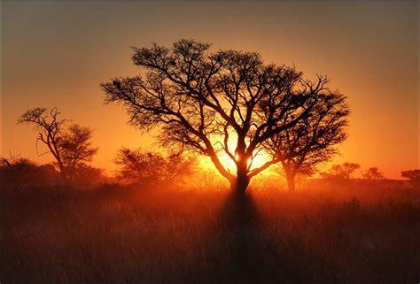 les arbres les plus beaux du monde regard sur le monde