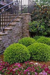 Ilex Vomitoria Nana Photos, Design, Ideas, Remodel, and