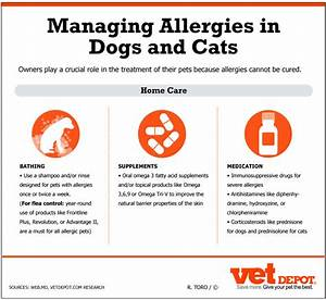 allergy to cats cats food allergies With dog food allergy symptoms