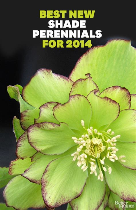 best plants and flowers for shade the best new shade perennials for 2014