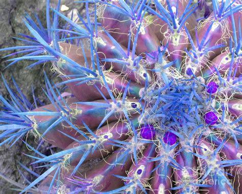 blue cactus photograph by margraf