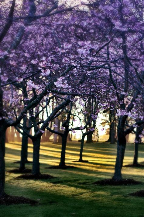 Early Spring In Cornwall Park, Auckland, New Zealand