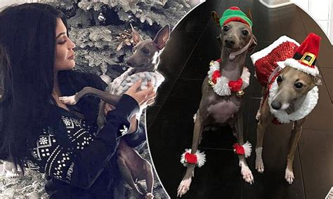kylie jenner treats dogs bambi  norman   christmas makeover daily mail