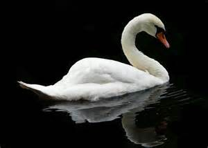 Queen of England with a Swan