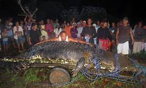 Giant Crocodile Caught Alive - World Record - YouTube