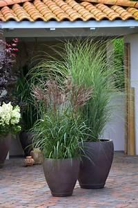 Kuebelpflanzen Fuer Terrasse : bildergebnis f r k belpflanzen f r schmale terrasse zahrada tr dg rd krukor blommor ~ Orissabook.com Haus und Dekorationen
