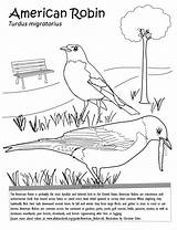 Robin Coloring Nature sketch template