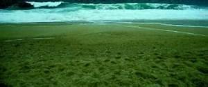 Besteht Sand Aus Muscheln : woraus besteht sand ~ Kayakingforconservation.com Haus und Dekorationen