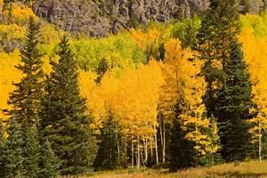 Free Images : landscape, tree, treeline, meadow, prairie ...  Fall