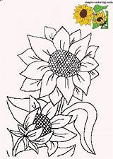 Sunflower Coloring Pages Flower Sunflowers Patterns Drawing Flowers Painting Magic Adults Pattern Stencil Designs Embroidery Wood Colouring Mosaic Para Clipart sketch template