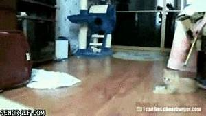 Cat Kitten GIF by Cheezburger - Find & Share on GIPHY