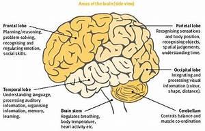 Nootropics For Brain Injury  U0026 Damage