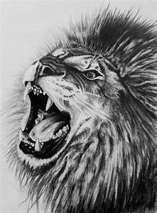 19+ Lion Drawing, Art Ideas, Sketches | Design Trends ...
