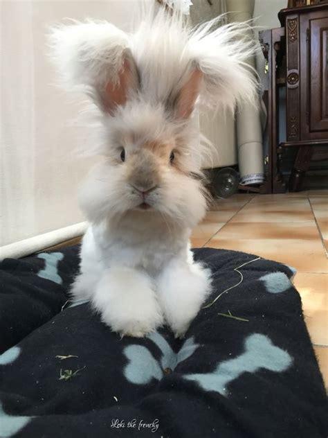 cute bunny rabbit   mohican luvbat