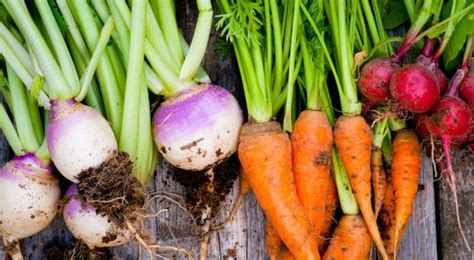 Top 9 Root Vegetables You Should Eat More Often